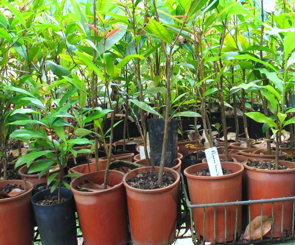KCons nursery plants