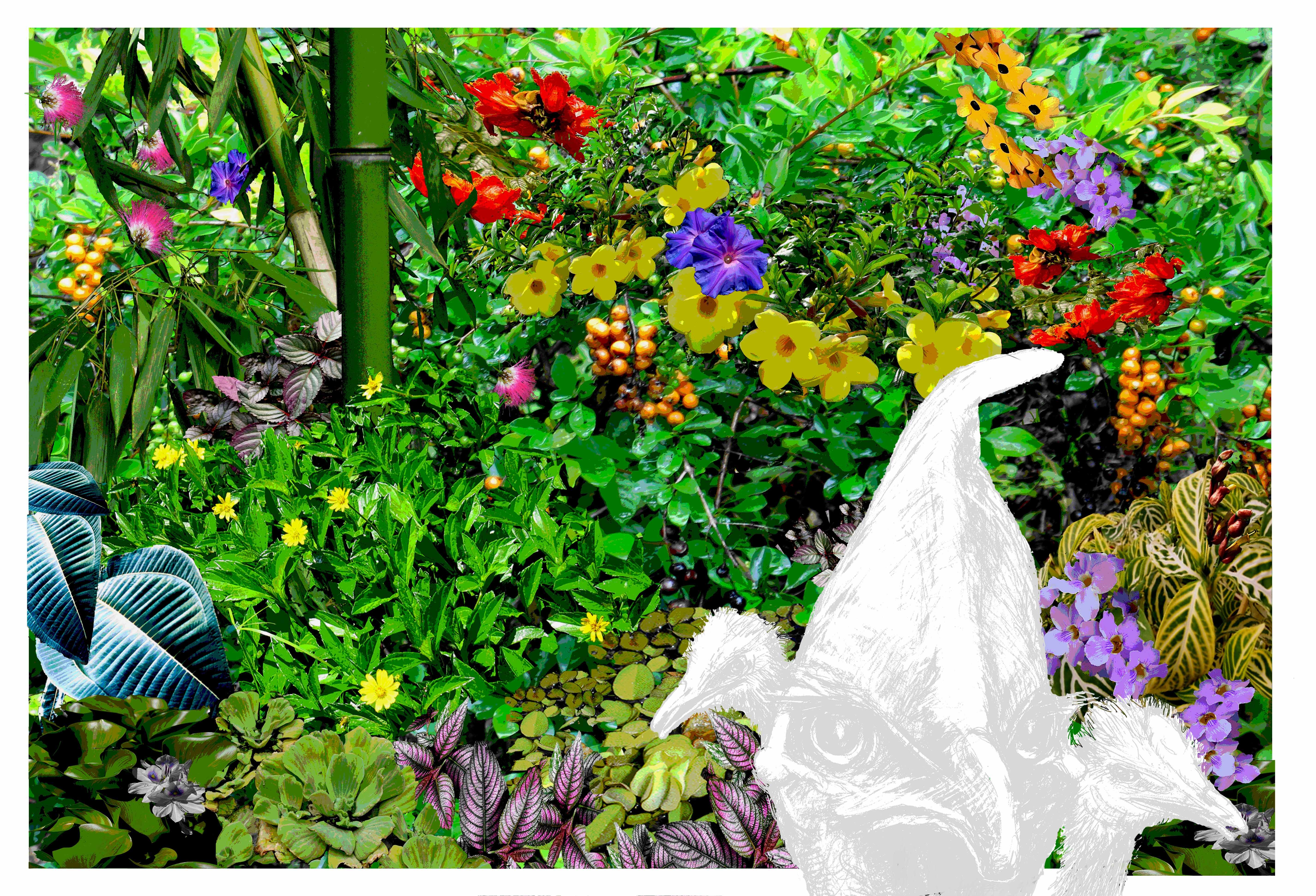 Weeds, kurandaConservation, Weeds of north queensland, margaretGenever