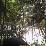 Cassowary, kurandaConservation, motion-activated camera, kuranda, saveTheCassowary