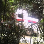 Cassowary, kurandaConservation, motion-activated camera, kuranda, saveTheCassowary, logging truck