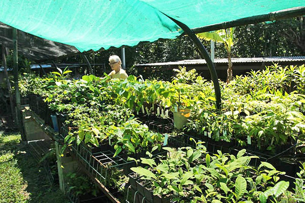 kurandaConservation, Kuranda, Kuranda Conservation, KCons, nursery, seedlings, plants, for sale, Jax, Kuranda Conservation Community Nursery, conservation, Australia, Australian, Queensland, far north, fnq, Kuranda, wet tropics, tropics, tropical,