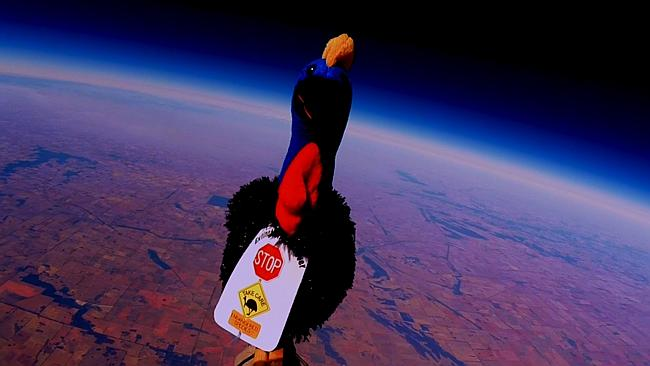 Karl the Cassowary – First Cassowary in Space