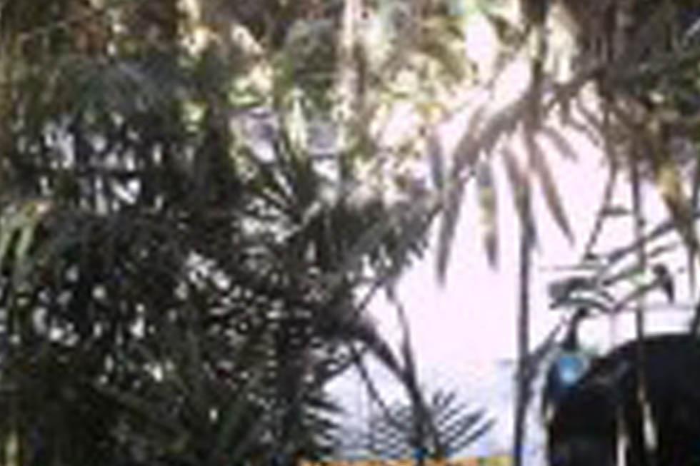 Cassowary monitoring